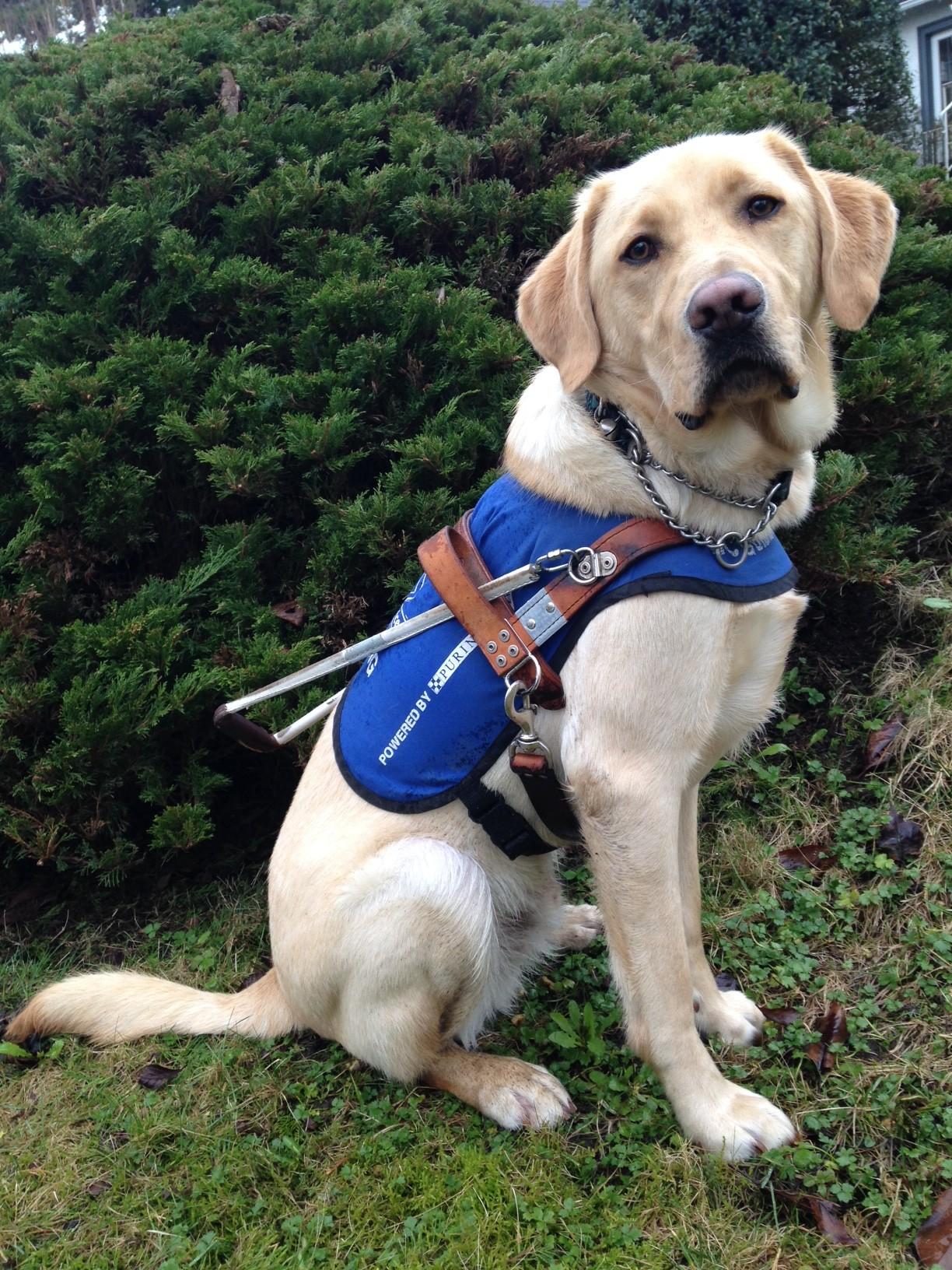 Is Guide Dogs Sponsor A Puppy A Good Charity