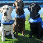 3 lab dogs