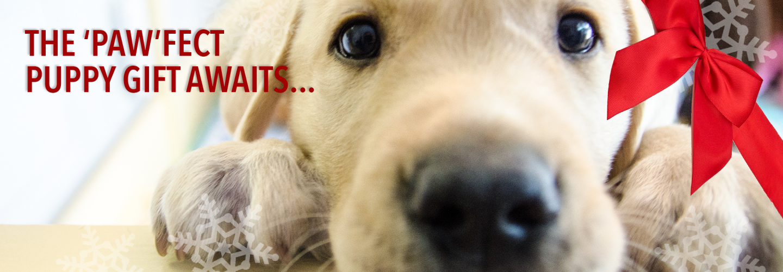Sponsor A Puppy!