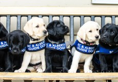 Join the Puppy Sponsorship Monthly Giving Program!