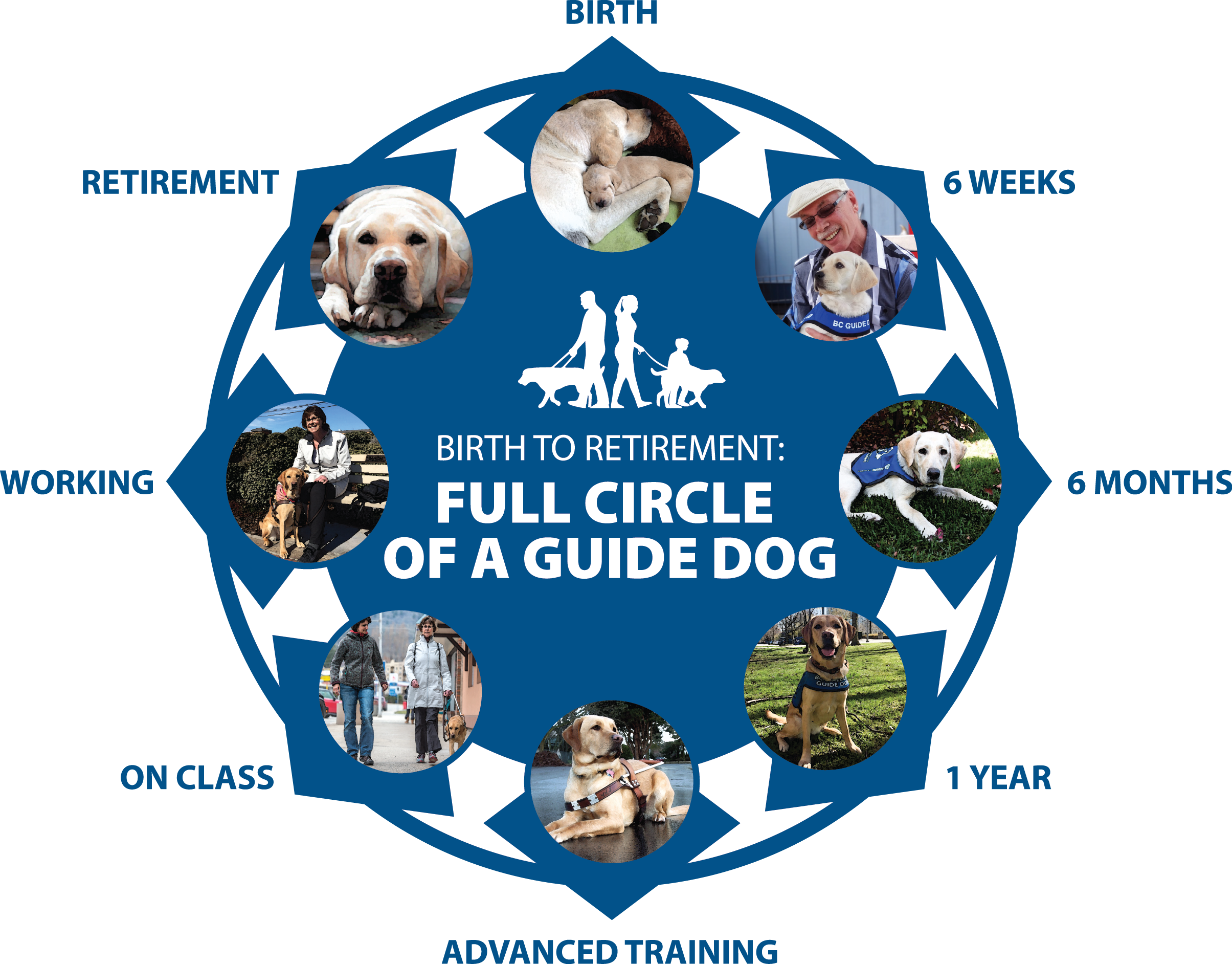For International Guide Dog Day, we are launching our movie Birth to Retirement: Full Circle of a Guide Dog