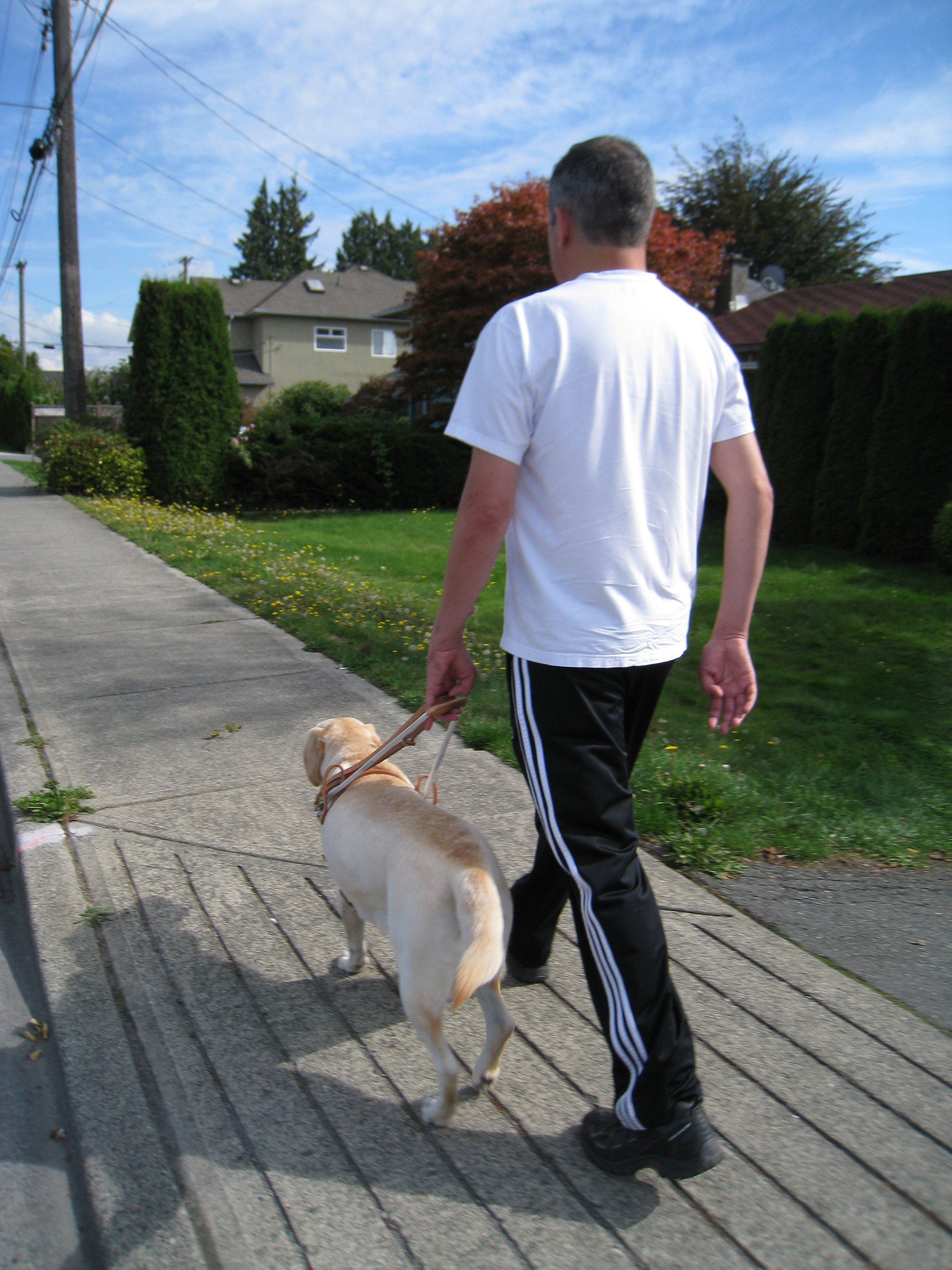 Our community: support dog a boy's new best friend   times colonist.