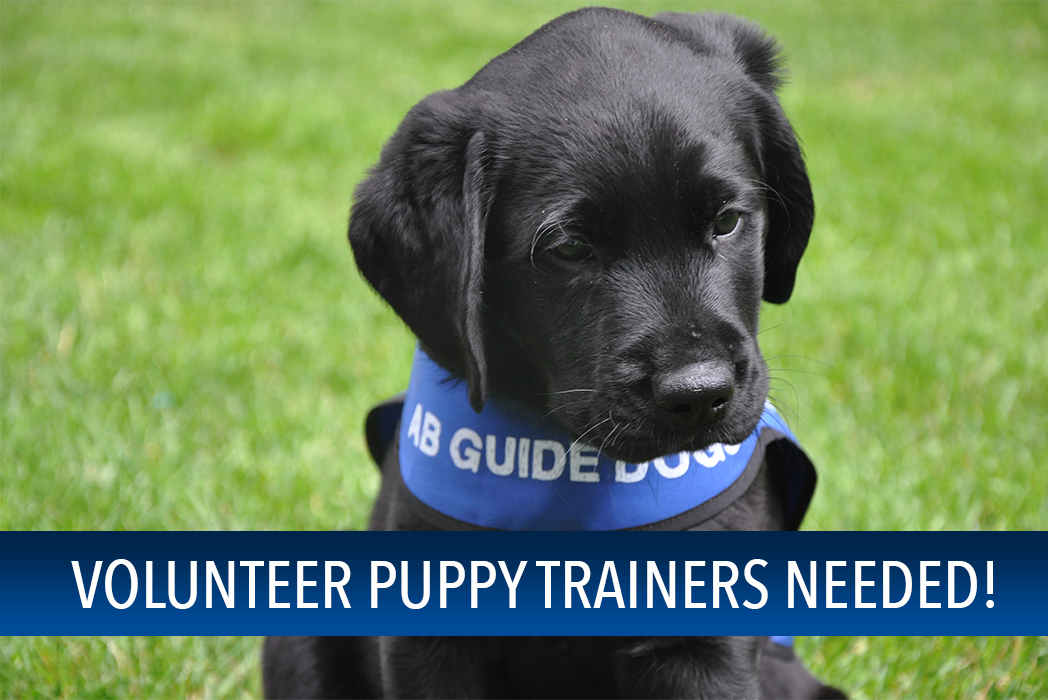 Volunteer Puppy Trainers Needed… Check out this video!
