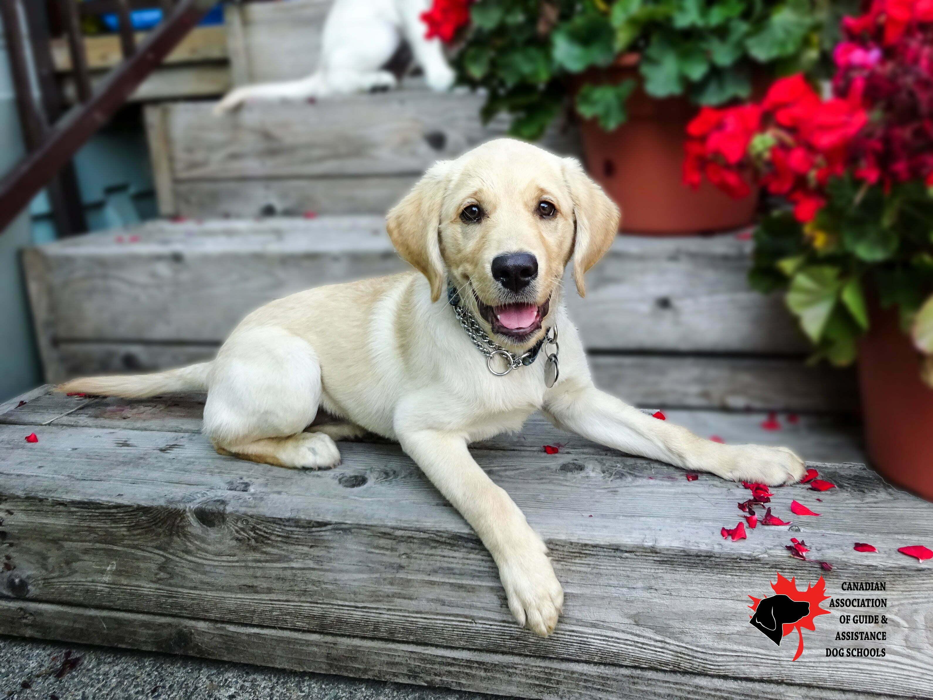 Dog Training Programs In Bc
