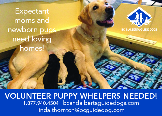 Volunteer Puppy Trainers Needed