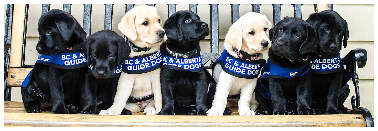 Join the Guide Dog Foundation Team