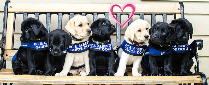 Share some Puppy Love with your Valentine