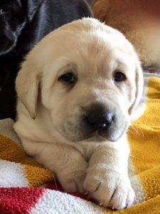Billie the puppy
