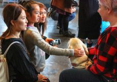 Largest crowd ever for Delta puppy party