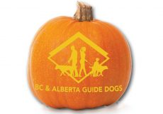 Hallowe'en Safety tips for dog owners