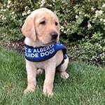 Sponsorship Puppy Rhea