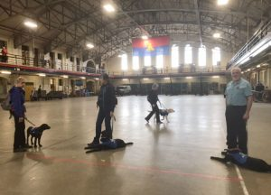 Puppies show off their obedience skills in the armoury