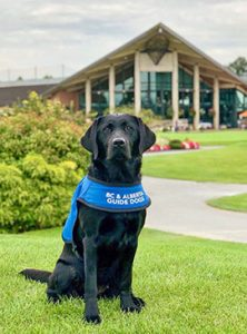 A puppy in training sits in front of Mayfair Lakes Golf Club