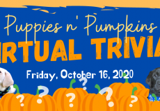 Join us for Puppies n' Pumpkins Virtual Trivia Night on October 16th!